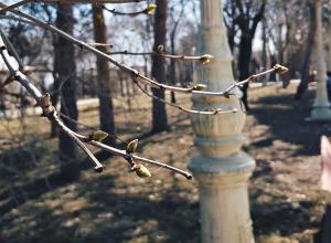Волгоградская область прогреется до рекордных +20ºС
