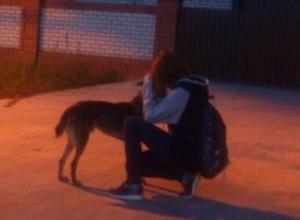 Многодетный отец застрелил собаку из охотничьего ружья на оживленном рынке в Волгограде