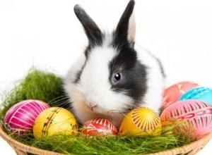 Жители Волгограда смастерят гнездо для пасхального зайца