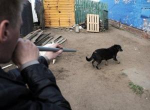 250 тысяч бюджетных рублей чиновники севера Волгограда потратили на отлов маленьких ручных собак