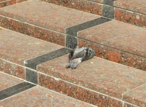 Центр Волгограда оккупировали мертвые голуби