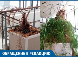 Зимний сад во Дворце спорта гибнет, - волгоградец