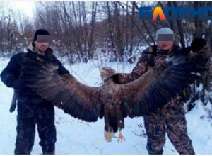 Полицейский похвастался в соцсетях убийством краснокнижного орлана в Серафимовичском районе