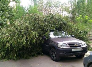 Рухнувшим деревом раздавило Chevrolet волгоградца