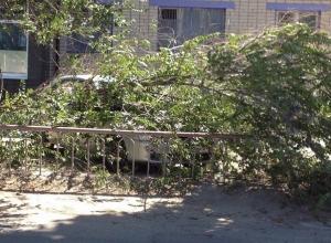 В Волгограде из-за разгула стихии деревья обрушились на авто