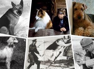 Какие породы собак были самыми популярными в советском Волгограде