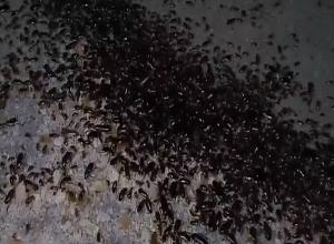 Улицу на севере Волгограда оккупировали тараканы