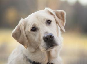 Зарубивший пса-спасателя на шашлык камышанин отделался обязательными работами