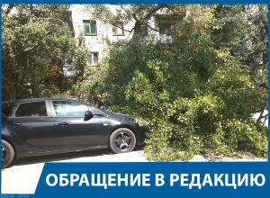 Рухнувший на автомобиль тополь чуть не убил парня на юге Волгограда