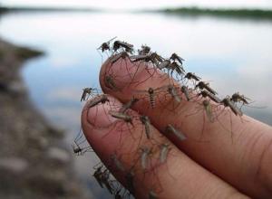 Этим летом Волгоград ждет комариный ад