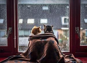 В Акулинин день синоптики предупреждают жителей Волгограда о дожде со снегом