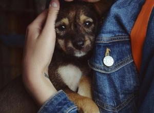 Лохматых обитателей приюта «Дино» разберут в Волгограде на ярмарке животных