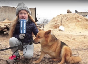 Под Волгоградом 100 собак в приюте «Дино» могут умереть от холода и голода