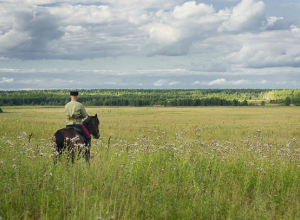 Волгоградские земли отдадут казакам без торгов