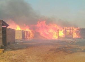 Под Волгоградом в сильном пожаре сгорел питомник для бездомных собак