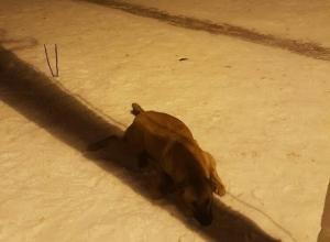 В Волгограде отравили собаку и бросили умирать на детской площадке