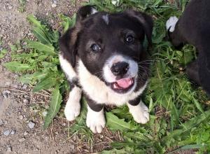 Волгоградский приют «Дино» уговорил Андрея Бочарова не отстреливать бездомных собак