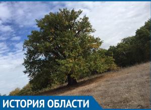 Дуб на острове Сарпинский официально признан самым древним деревом Волгоградской области