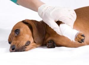 Чиновники продали ветеринарную лечебницу в Волгограде