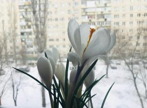 Синоптики запланировали начало весны в Волгограде на первые числа апреля