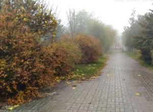 Дожди в области и туман в Волгограде обещают синоптики