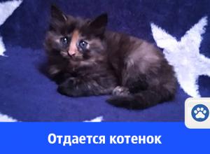 Кому ласковую маленькую кошку?