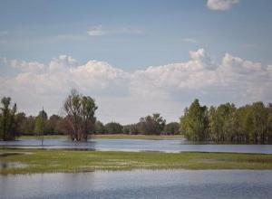 В Волгоградской области из-за пожаров отменен сезон охоты