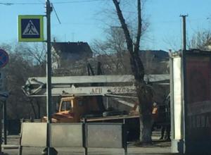 В Волгограде снова пилят деревья