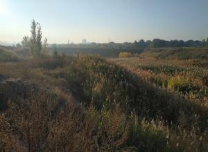 Последний рабочий день уходящей недели в Волгограде будет теплым