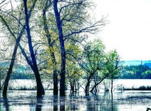 Волгоградские чиновники обещают сделать поливочный водовод к Новому году