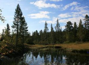 Региональные власти снова запрещают волгоградцам отдыхать в лесу