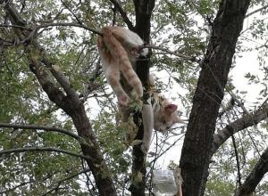 Кот медленно умирает под окнами пенсионного фонда в Волгограде