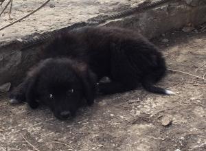 Дети до полусмерти закидали камнями больных щенков на севере Волгограда