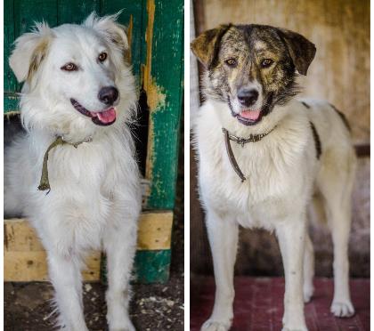 В Волгограде ищет дом парочка влюбленных собак-неразлучников