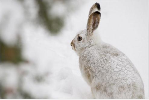 Браконьер заплатит 4 тысячи за убитых зайцев под Волгоградом