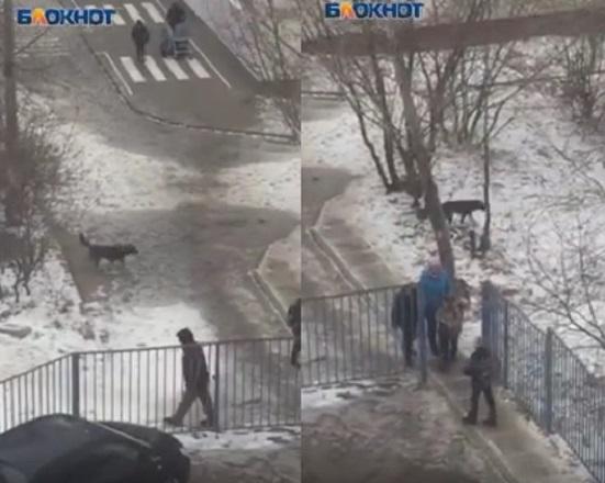 Бездомная собака нападает на школьников в Центральном районе Волгограда