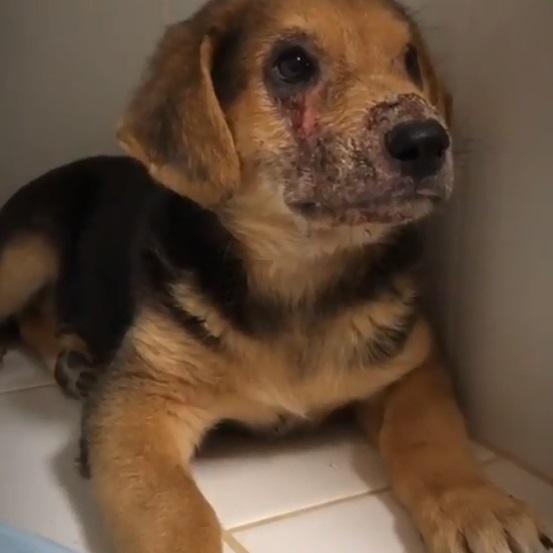 Не умел улыбаться: клещи разъели морду щенку в Волгоградской области