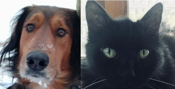 Волгоградцы сделали выбор между собаками и кошками