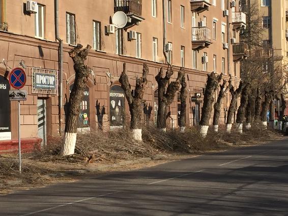На центральной набережной Волгограда уничтожают деревья