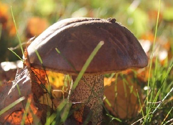 ВВолгоградской области школьница насмерть отравилась грибами