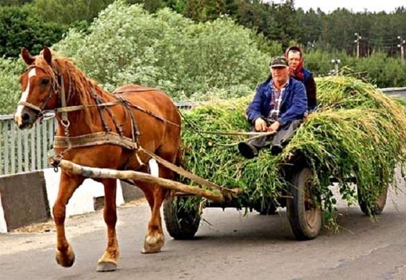 Повозка с лошадью наехала на ограждение под Волгоградом: пострадали взрослые и ребенок