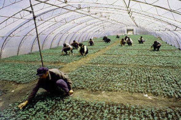ВВолгоградской области задержаны нелегалы-овощеводы