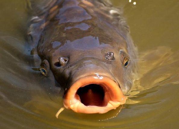 Склад тухлой рыбы на продажу обнаружили в Волгоградской области