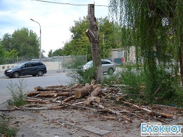 В Волгограде из-за строительства кафе незаконно вырубили 61 дерево