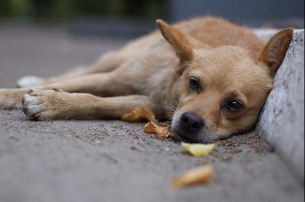 Волонтеры: В Волгограде молодая пара жестоко травит собак на глазах у детей
