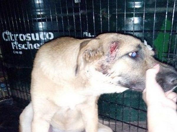 В Волгограде собака с пулевым ранением в голову ищет хозяина