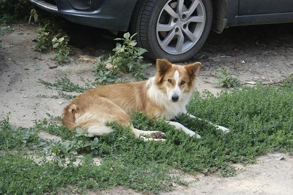 Битва соседей: убить или оставить охранниками личных авто 8 стерилизованных собак