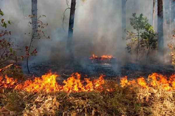 Поджигатели леса задержаны на западе Волгограда