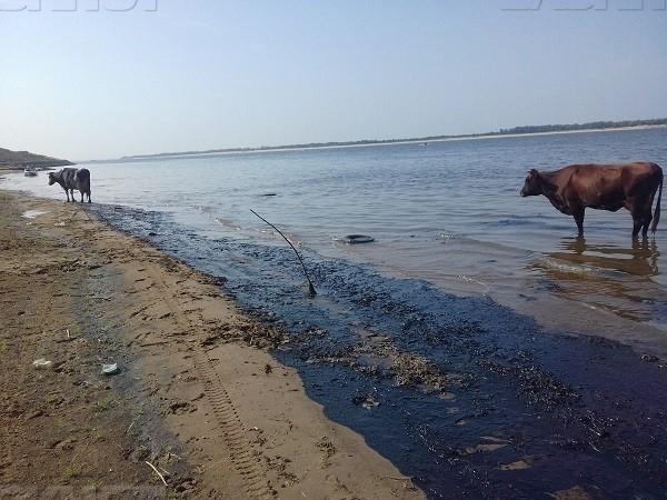 ВВолгоградской области установили вред отразлива нефтепродуктов вВолгу