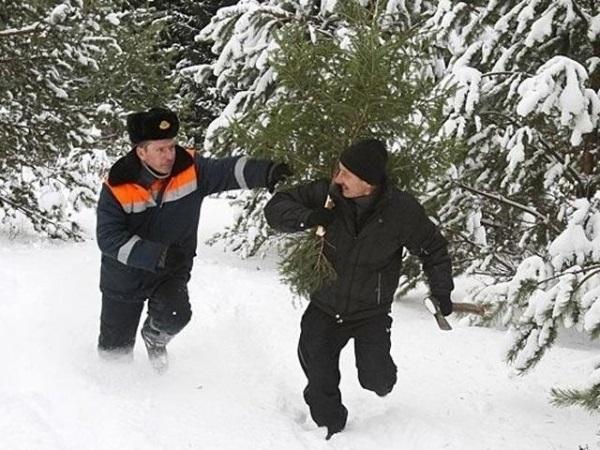 Накануне нового года под особую охрану взяты елки Волгоградской области